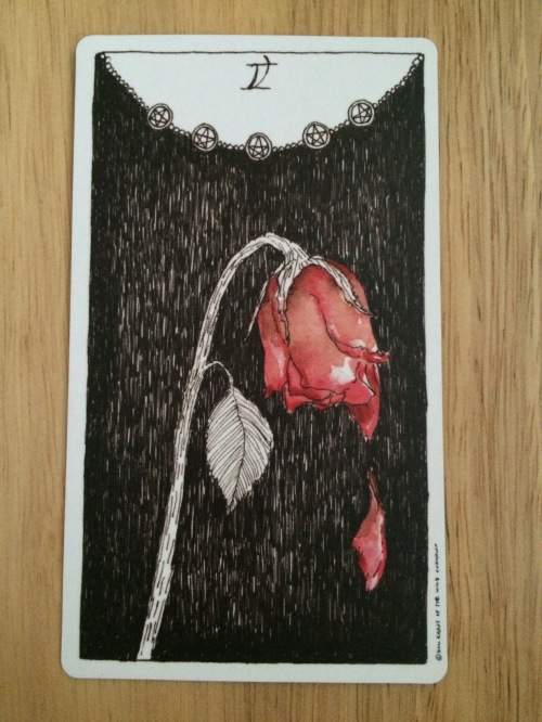 PAST - 5 of Pentacles - Wild Unknown Tarot - A wilted red rose against a black background